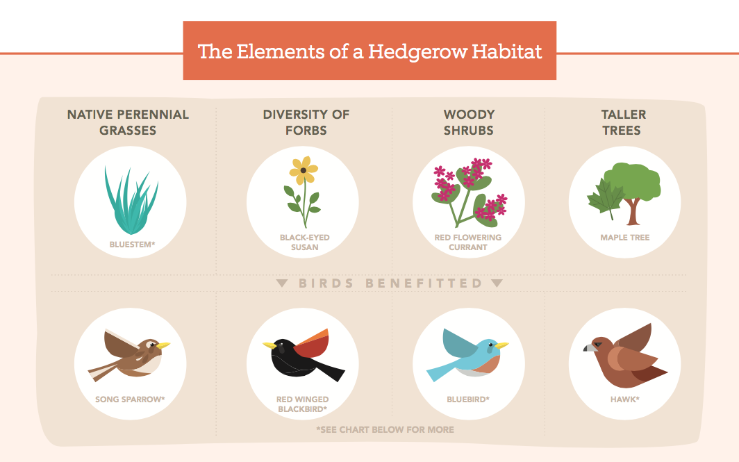 Lessons Learned: Biodiversity + Birds