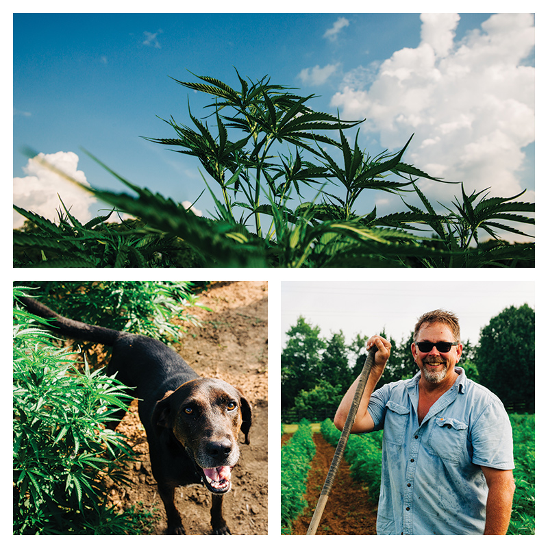 hemp grid with dog, sky and man