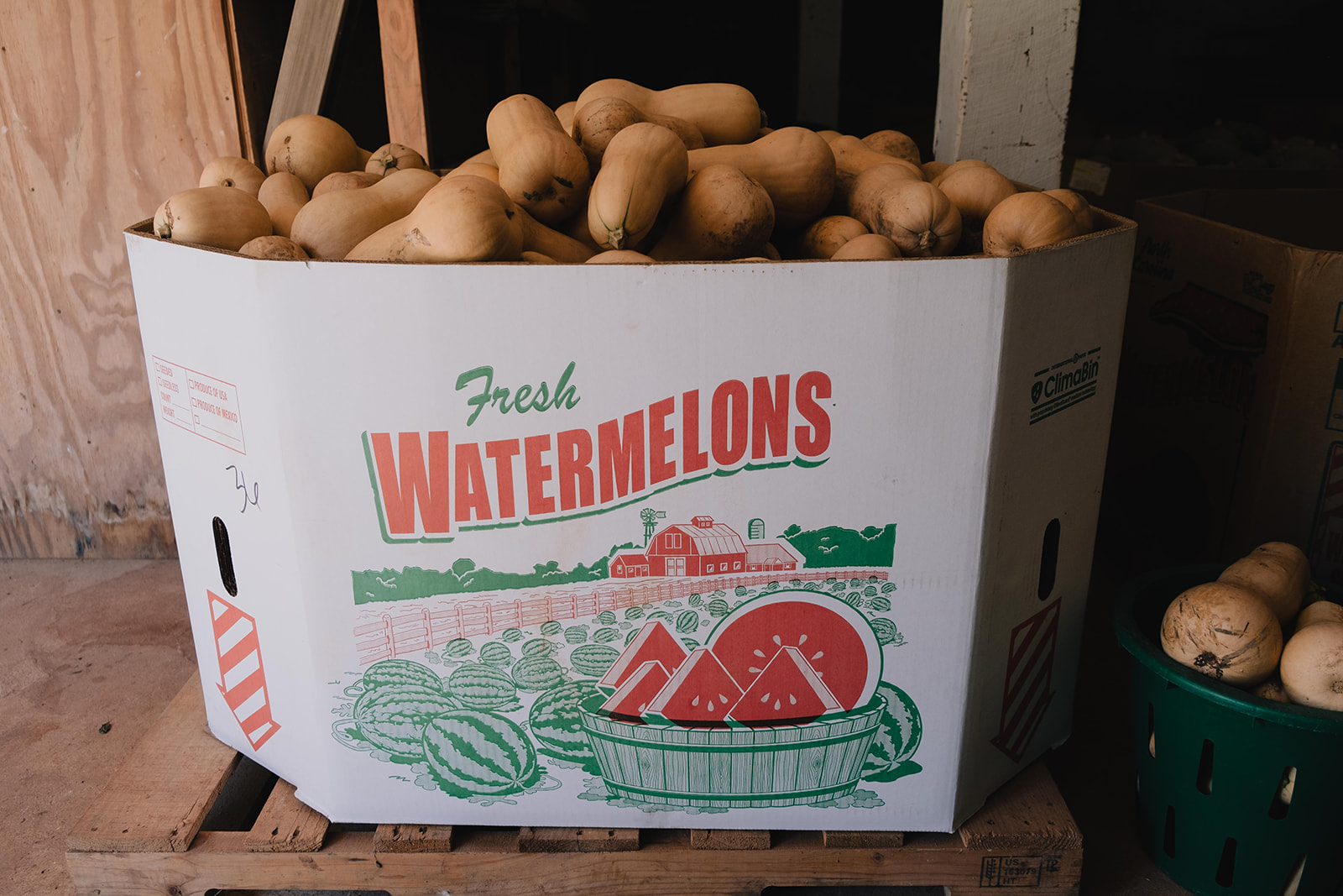 squash in a watermelon box